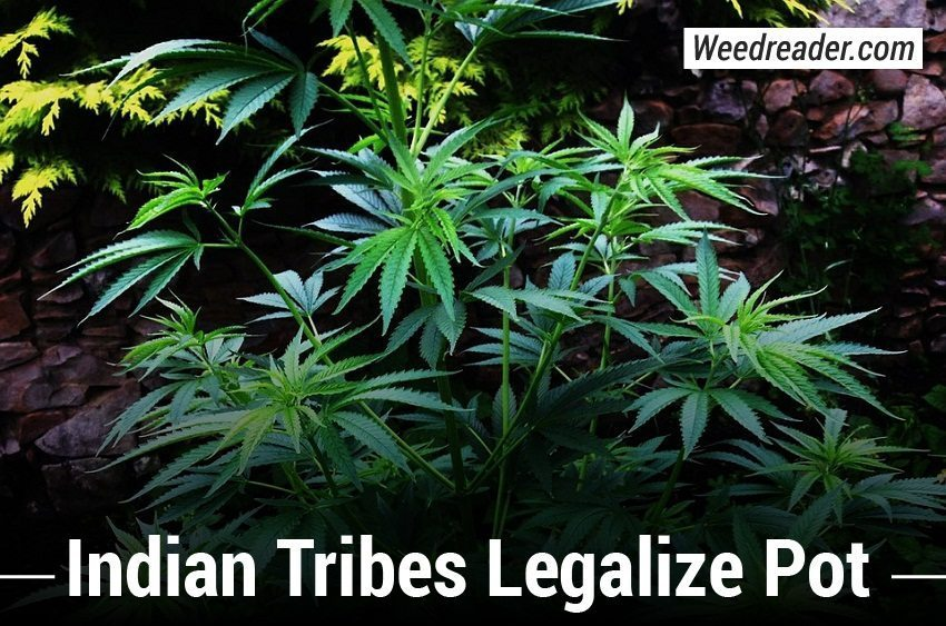 possible ways of reforming laws regarding marijuana In the us, support for legalising cannabis has crossed the 50 percent threshold   if, as seems likely, the laws are implemented (the federal government is still   by a new group called smart approaches to marijuana (learnaboutsamcom.
