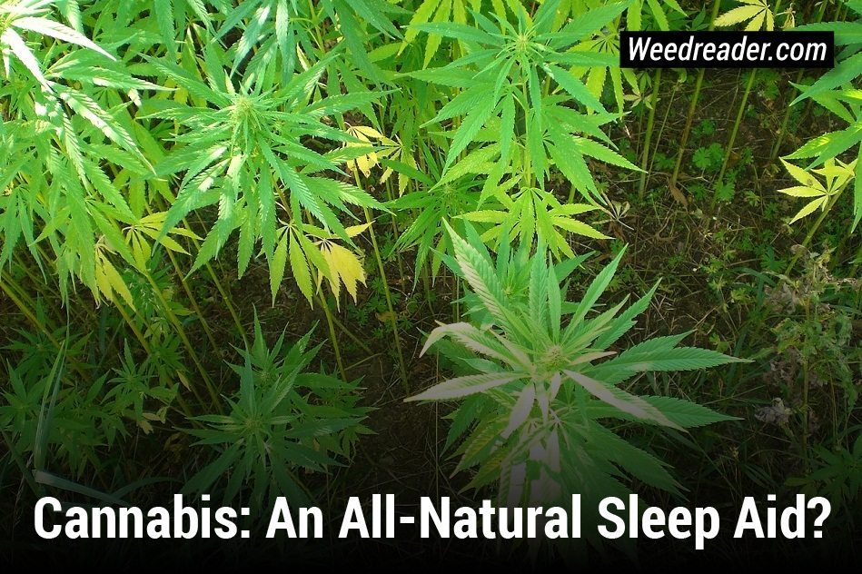 how to avoid weed anxiety
