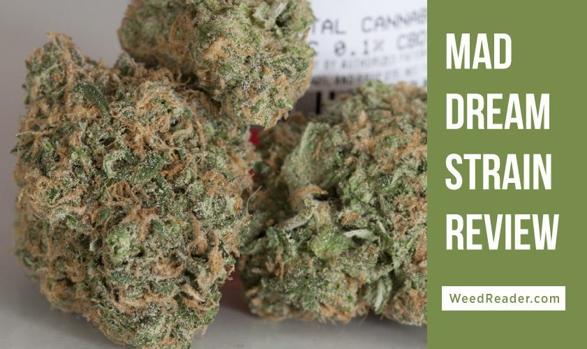 mad dream strain review