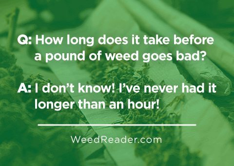 Q. How long does it take before a pound of weed goes bad A. I don't know I've never had it longer than an hour