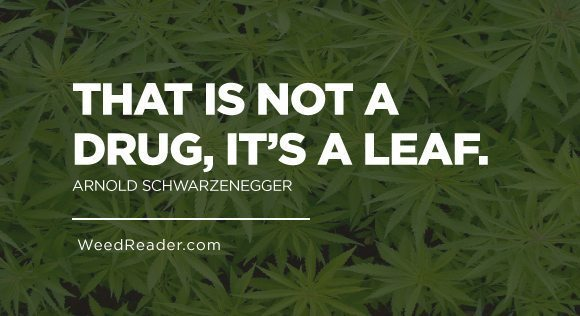 That is not a drug it's a leaf