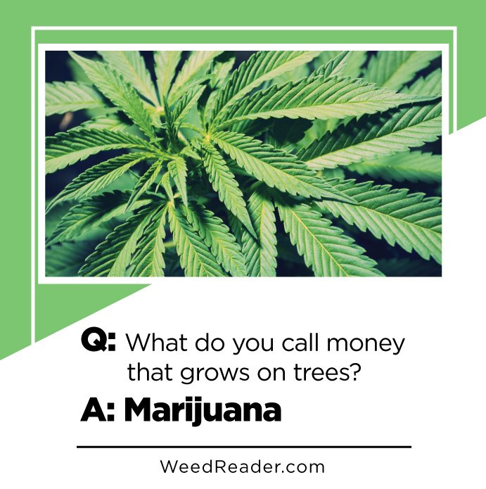 What Do You Call Money That Grows On Trees