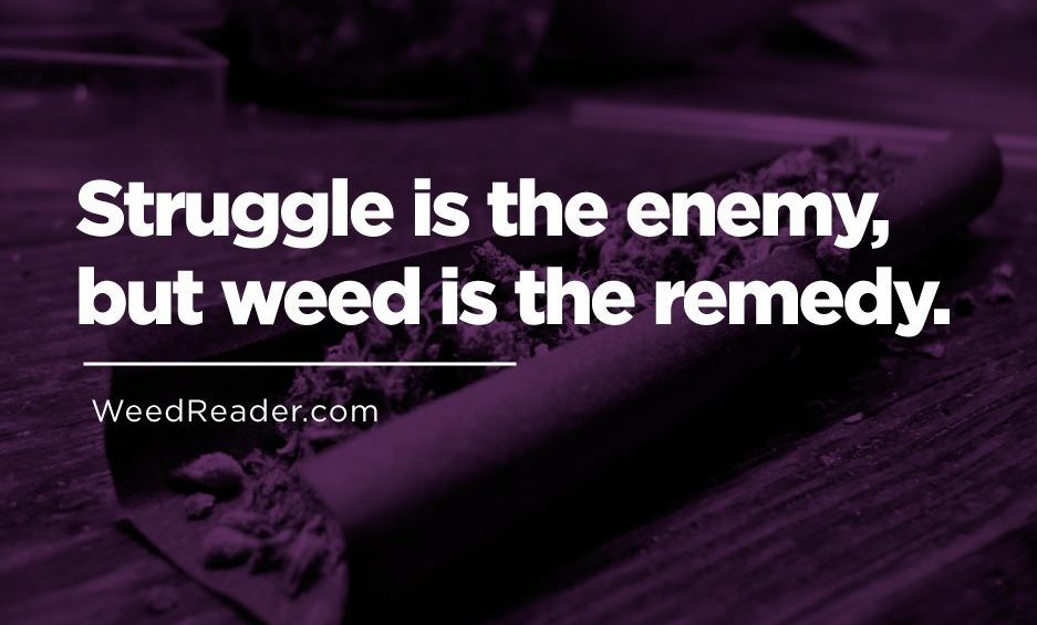 Struggle is the enemy but weed is the remedy