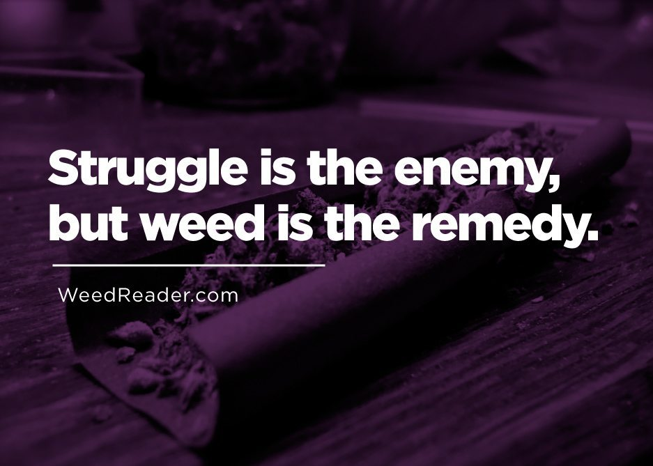 Struggle is the enemy, but weed is the remedy