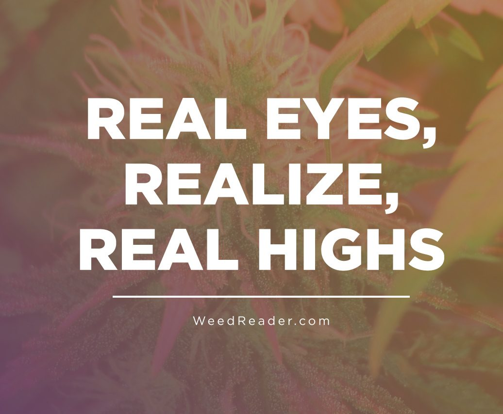 Real Eyes, Realize, Real Highs