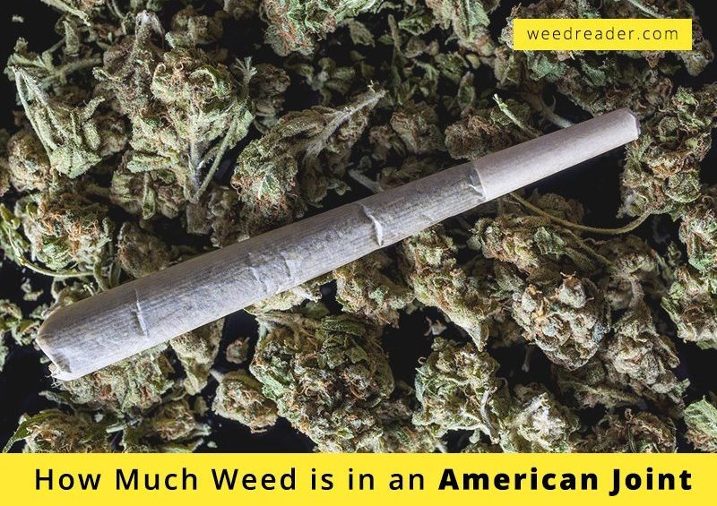 american joint