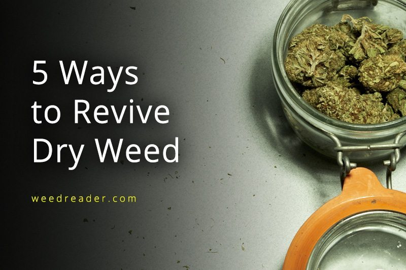 weed tips