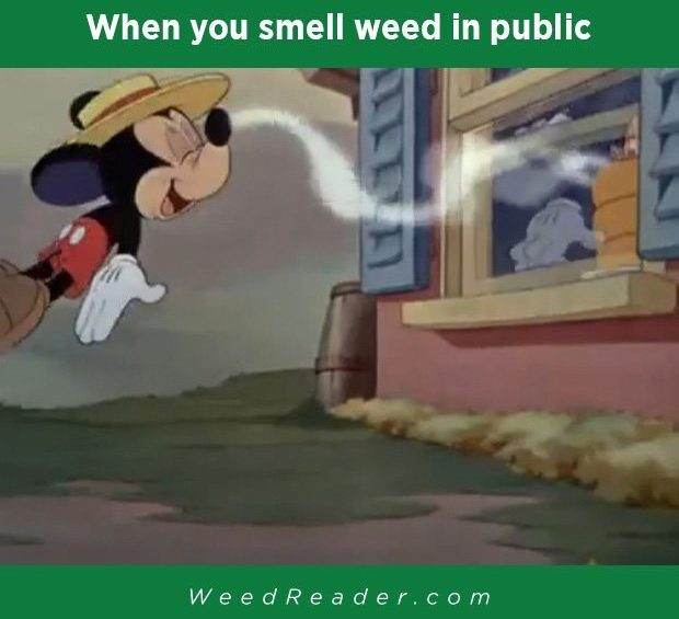 when you smell weed in public