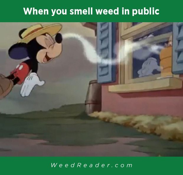 when-you-smell-weed-in-public