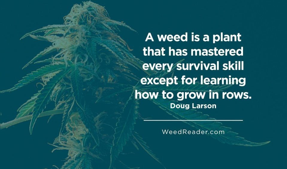 A weed is a plant that has mastered every survival skill except for learning how to grow in rows