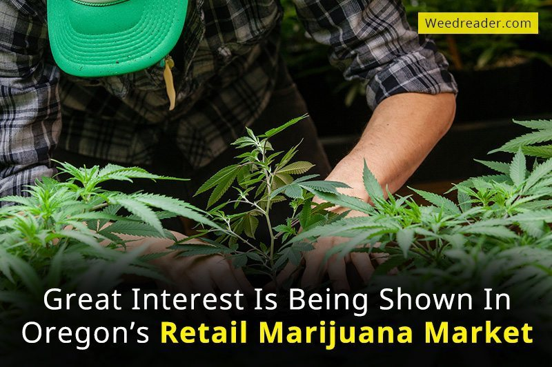 Great Interest Is Being Shown In Oregon Retail Marijuana Market