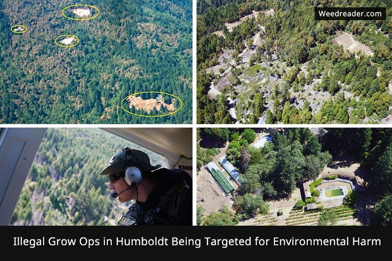Illegal Grow Ops in Humboldt Being Targeted for Environmental Harm
