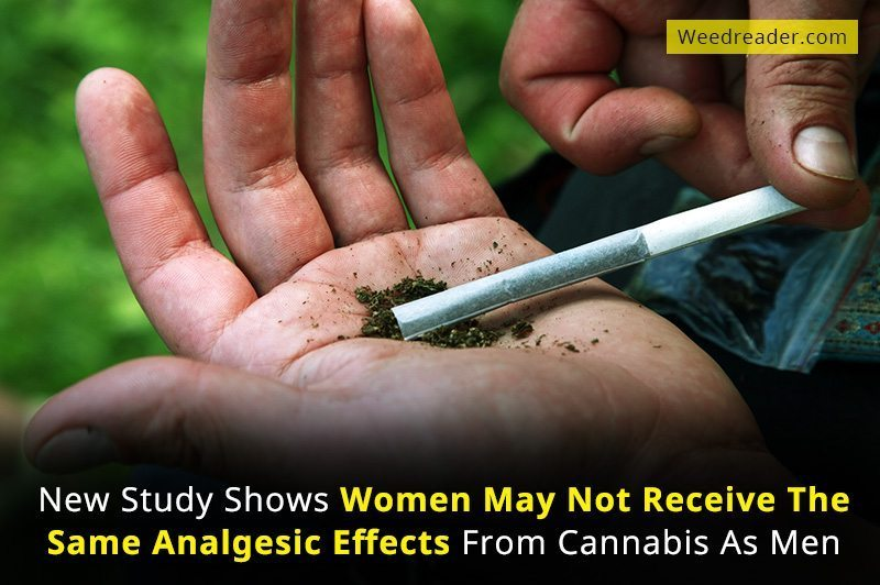 New Study Shows Women May Not Receive The Same Analgesic Effects From Cannabis As Men