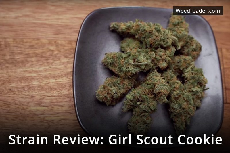 Strain Review Girl Scout Cookie
