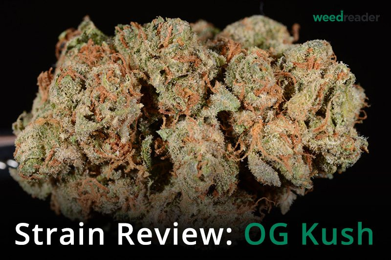 Strain Review OG Kush