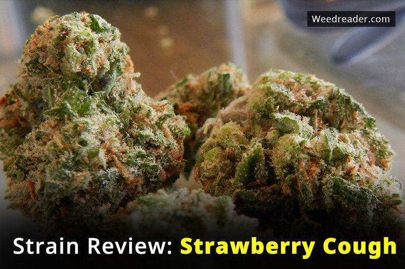 Strain Review Strawberry Cough