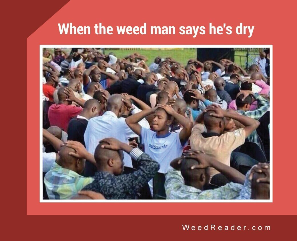 when the weed man says he's dry