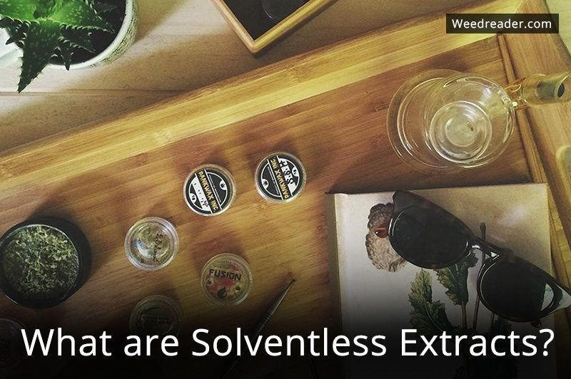 What are Solventless Extracts