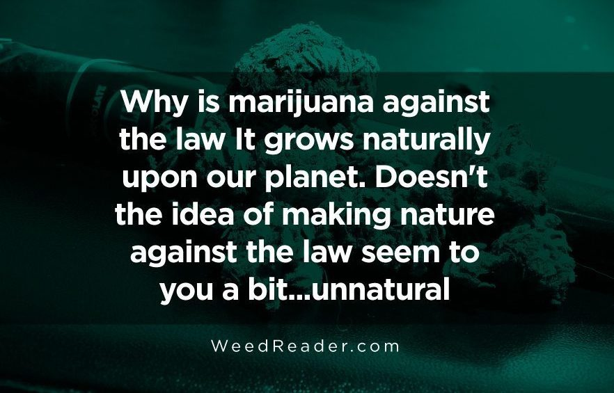 Why is marijuana against the law It grows naturally upon our planet. Doesnt the idea of making nature against the law seem to you a bit...unnatural