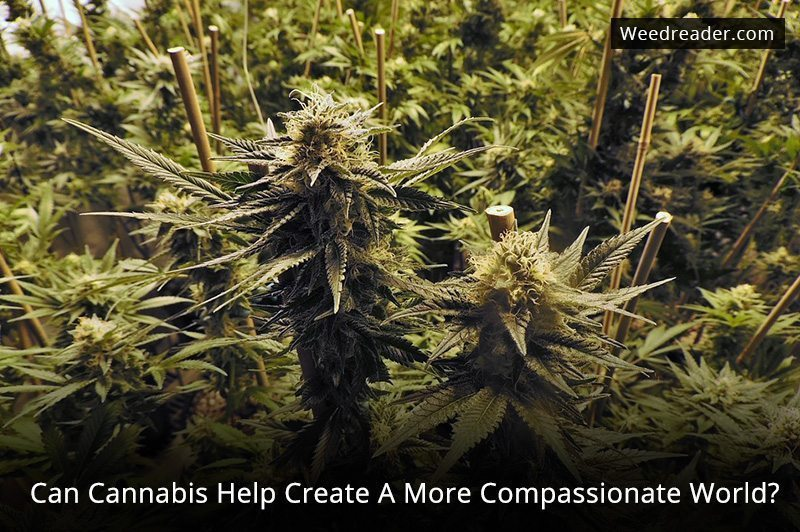 Can Cannabis Help Create A More Compassionate World