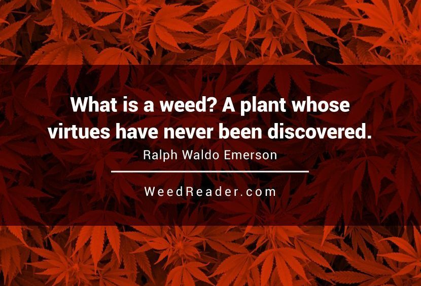 What is a weed  A plant whose virtues have never been discovered.Ralph Waldo Emerson