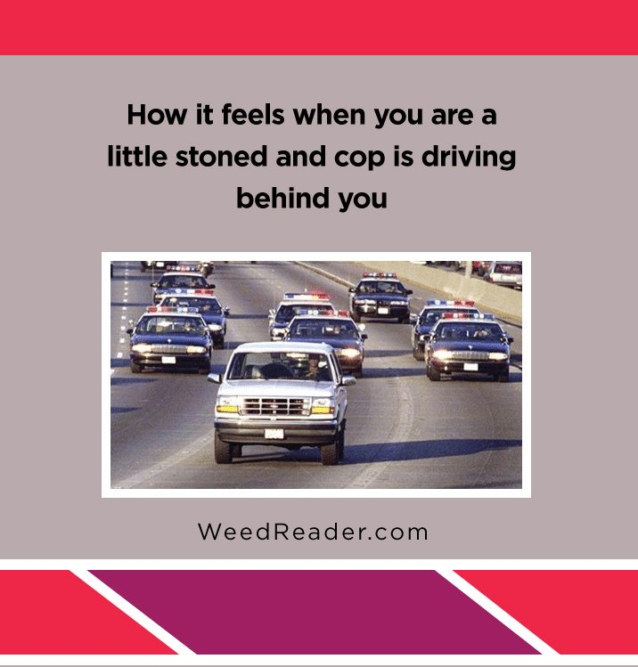 how-it-feels-when-you-are-a-little-stoned-and-cop-is-driving-behind-you