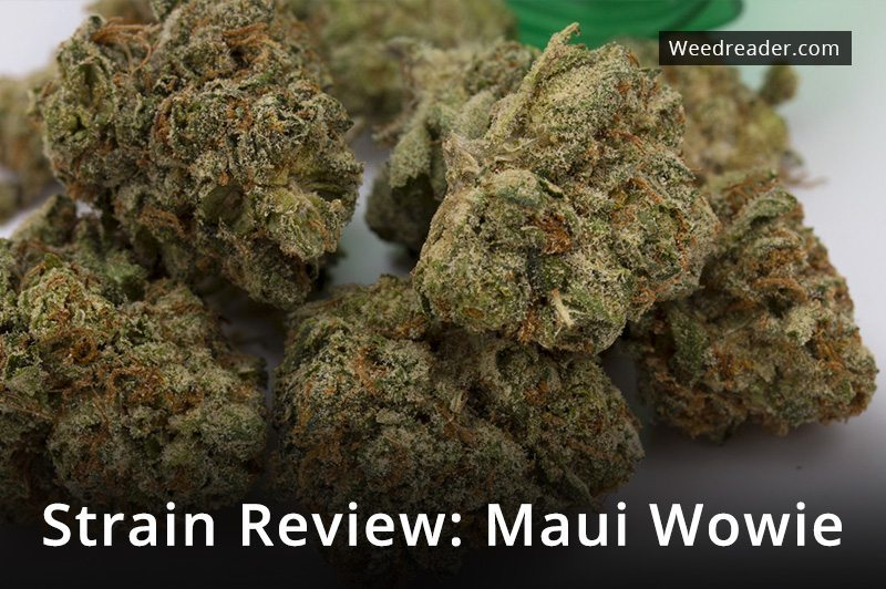 weedreader review