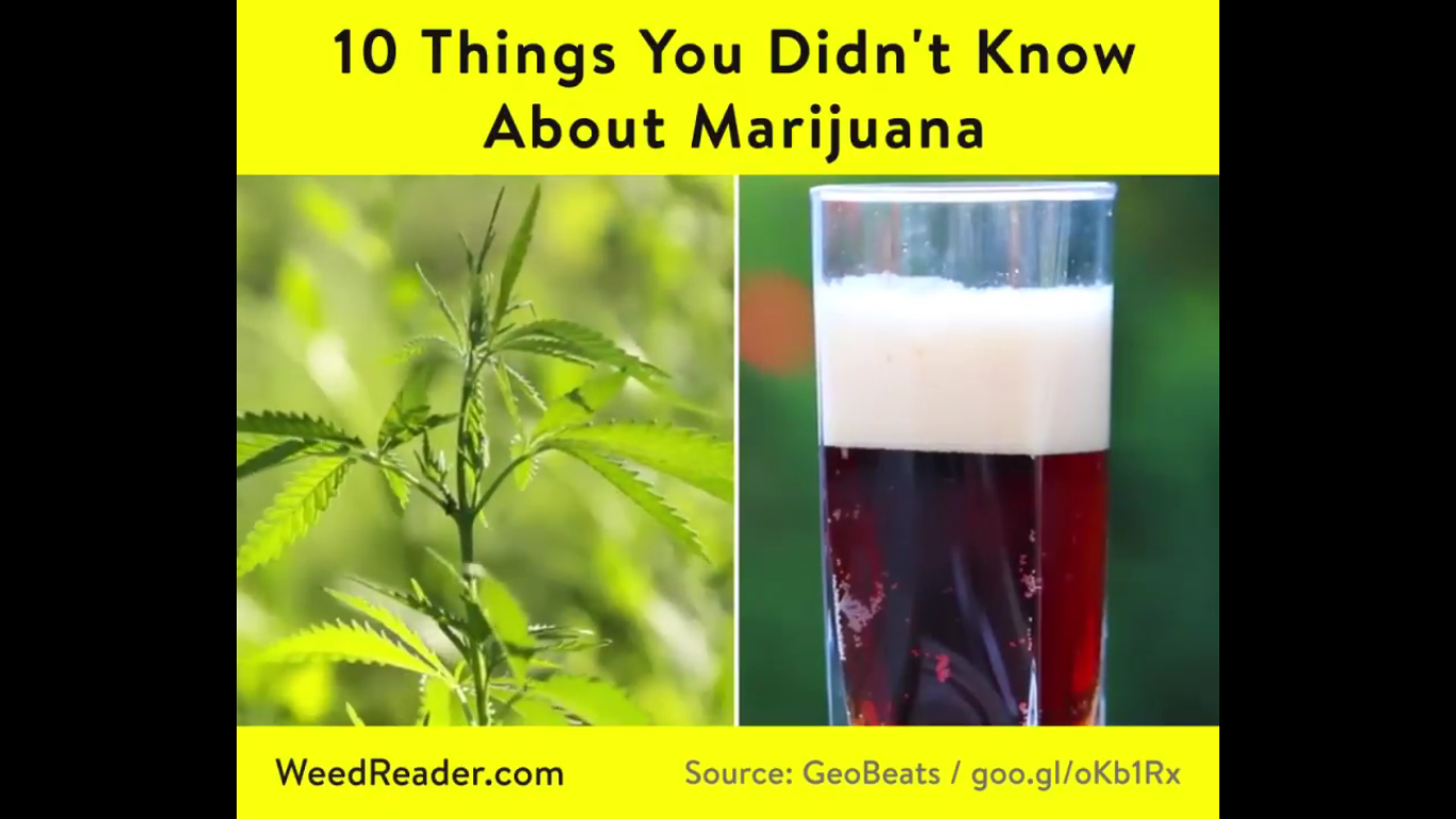10 Things You Didn't Know About Marijuana - Weed Reader