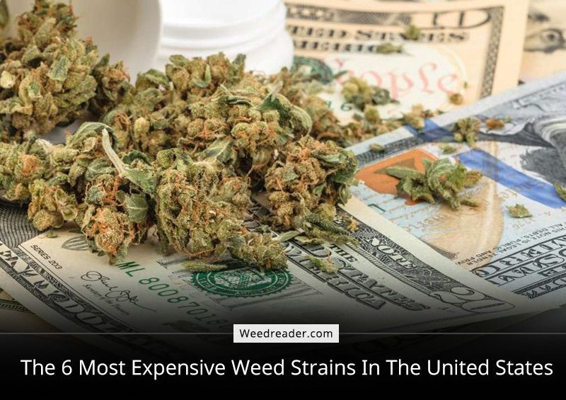 Pricey Pot The 6 Most Expensive Weed Strains In The United States