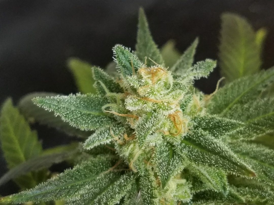 The Weekly Strain Breakdown: Headband