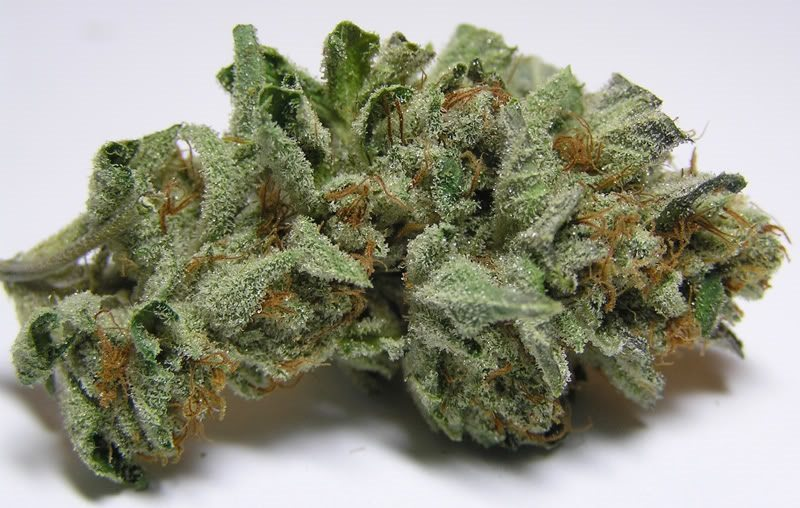 My Favorite Strains Ghost OG Weedist